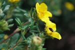 bugs in buttercups