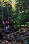woodland trail image
