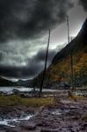 HDR marsh photo