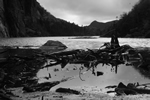 black and white swamp photo